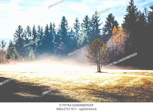 A single young tree stands in a clearing in the fog, above it the sun