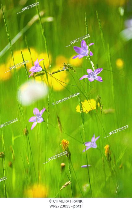 spring wild flowers in lush green garden - short depth of field
