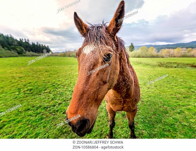Horse at a Farm in Northern Californa