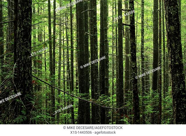 Dense dark forest with green foliage contrast