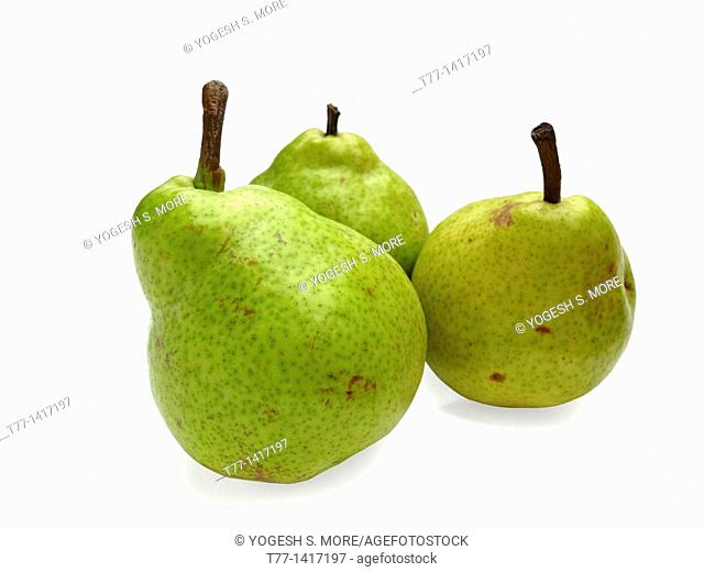 Pear Psylla, pyrus communis, India