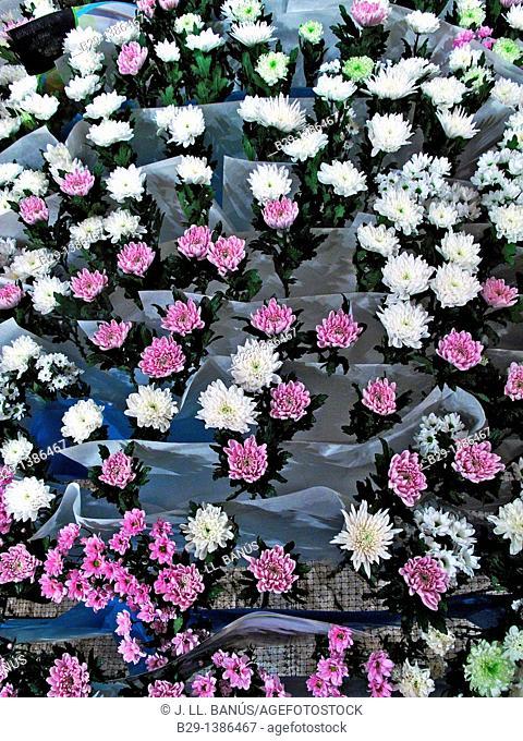 Flower festival in Girona