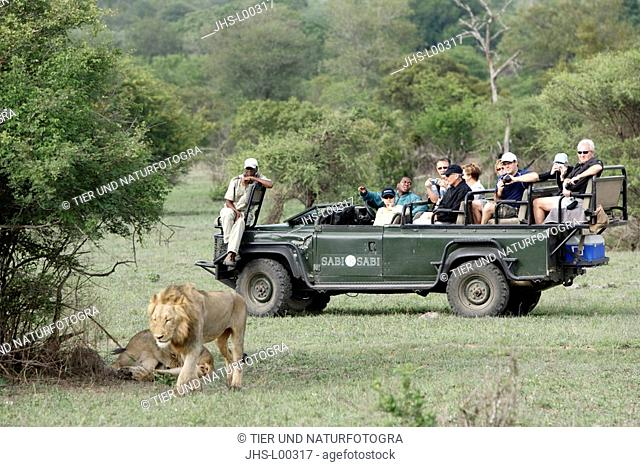 Safari,Tourists in open Landrover,Kruger National Park,South Africa,watching,Lion,Panthera leo