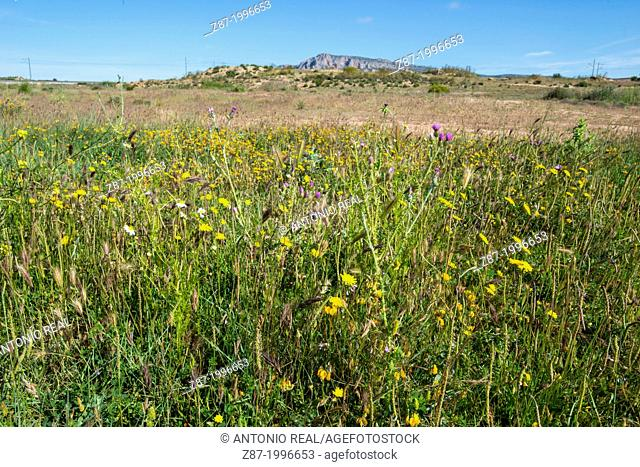 Meadow, Reservoir of Almansa, Albacete province, Castilla-La Mancha, Spain