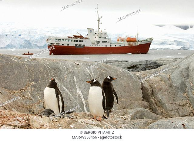Antarctica, Antarctic Peninsula, Lemaire Channel, Petermann Island, Antarctic Dream ship and Gentoo Penguins