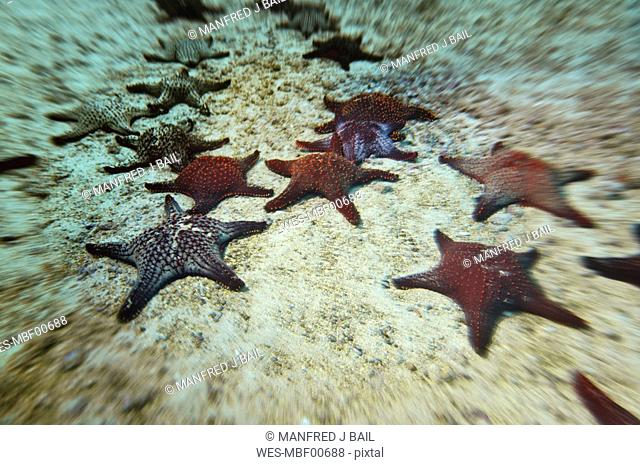 Starfish on sea bed, close-up