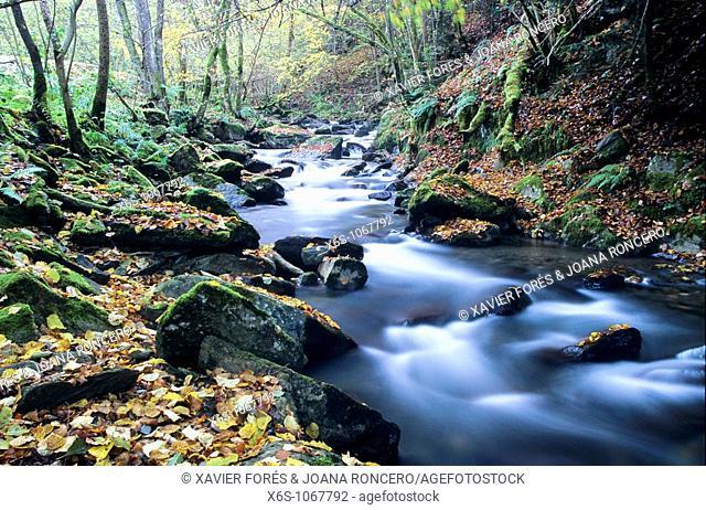 Toran Valley, Aran Valley, Lleida, Spain / Vall de Toran, Vall d'Aran, Lleida, España