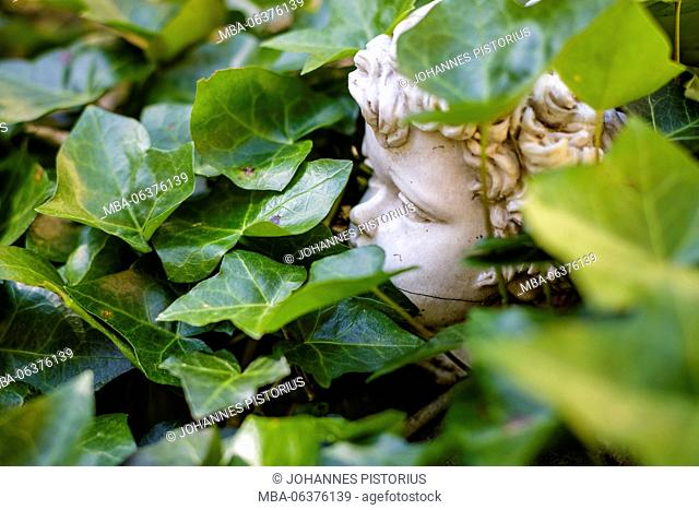 Europe, Italy, Latium, Rome, Vatican, head of an angel between ivy on a tomb on the Campo Santo Teutonico
