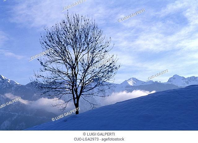 Snow on ash, Italy