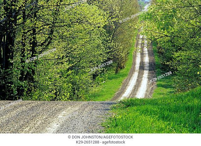 Country road with trees in spring foliage, near Sheguiandah, Manitoulin Island, Ontario, Canada