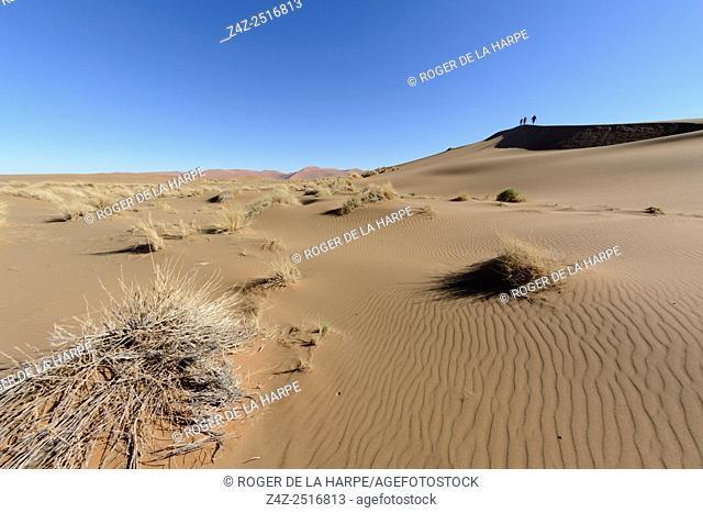 Desert scenery. Sossusvlei. Namib-Naukluft National Park. Near Sesriem. Namibia