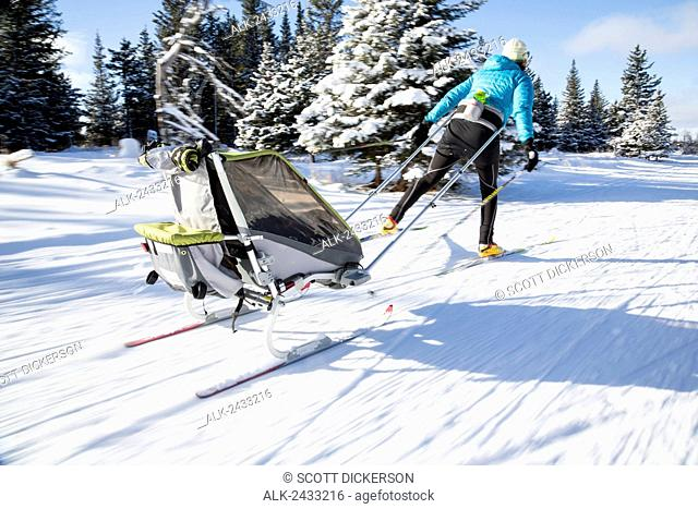 Mother cross country skiing with a baby riding in a ski sled (pulk) at the Baycrest Ski Trails, Homer, Kenai Peninsula, Southcentral Alaska, winter