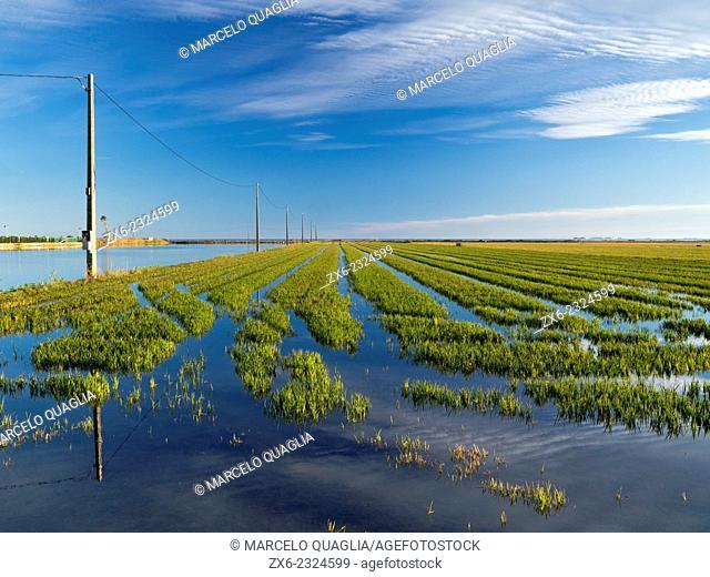 Flooded rice fields after harvest. Ebro River Delta Natural Park, Tarragona province, Catalonia, Spain