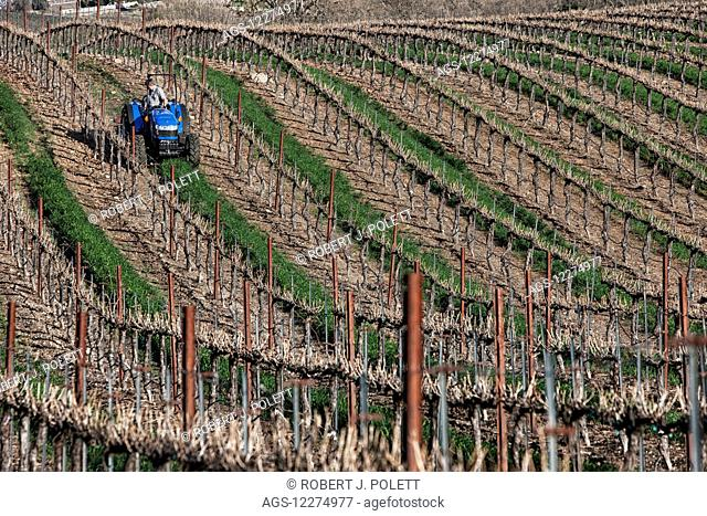 Mowing in a vineyard; Paso Robles, California, United States of America
