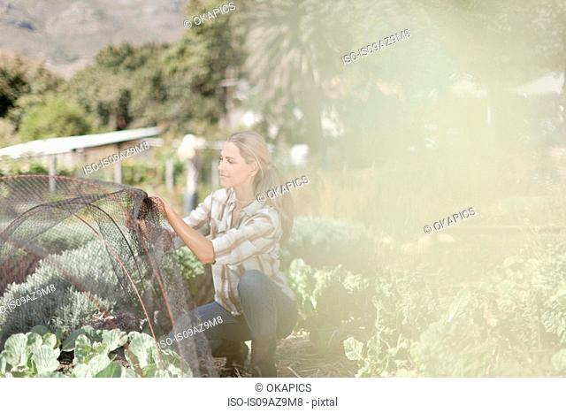 Mature woman arranging netting over plants in garden
