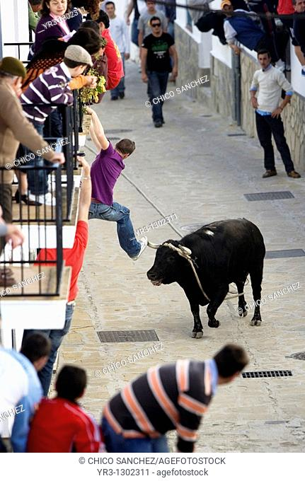 People fill a street during a fighting bull running loose at the annual running of a bull event in Benamahoma village, Cadiz province, Andalusia, Spain, April 4