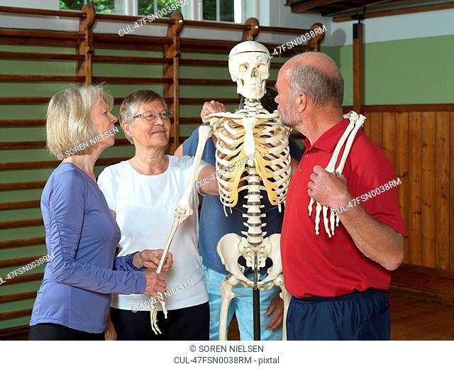 Older people examining skeleton
