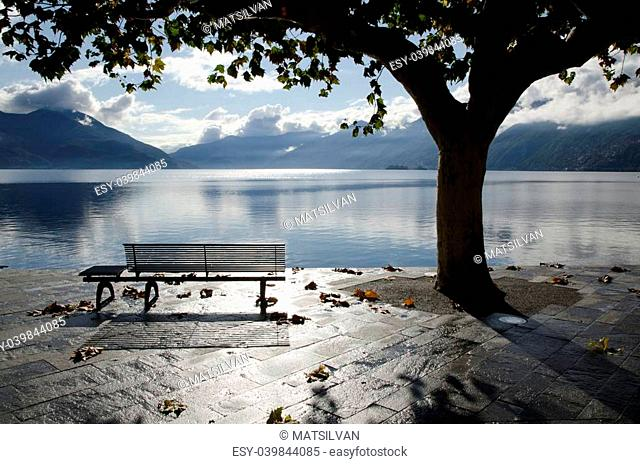 Bench and tree on the lakefront in backlight with mountains and clouds in ascona switzerland