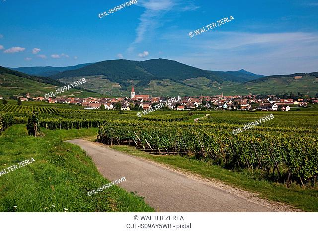 Landscape with road through vineyards, Alsace, Lorraine, France