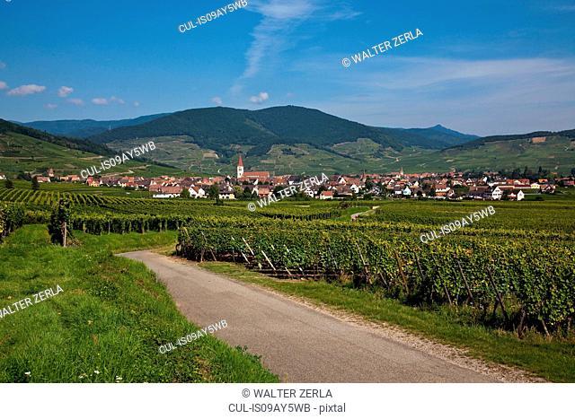 Landscape with road through vineyards, Alsace, Lorraine, France
