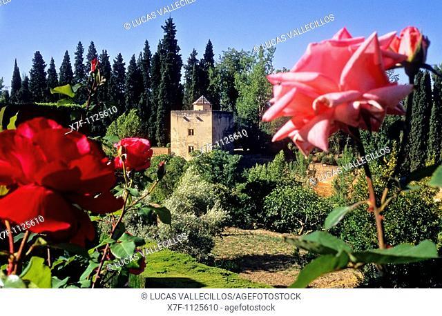 El Generalife Generalife gardens  Torre de las Infantas  Alhambra  Granada  Andalucia  Spain