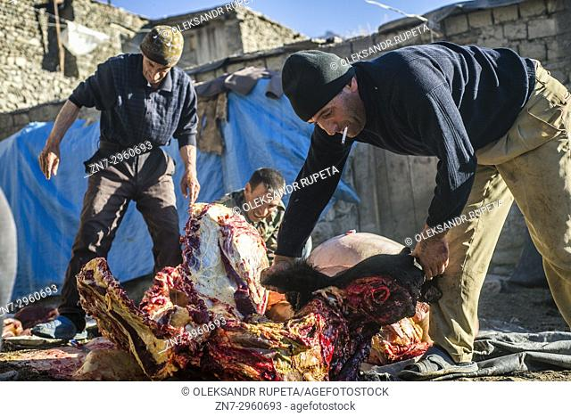 Men butcher a bull in a yard in Khinalig village, Quba region, Azerbaijan. Khinalig is an ancient village located deep in Caucasian mountains on the height of...