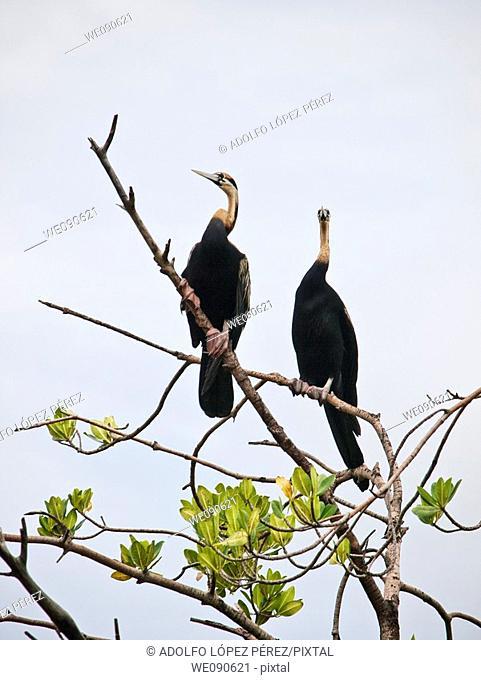 Birds in Bird's Island, Ziguinchor, Senegal