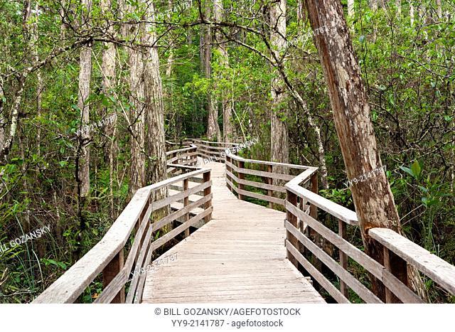 Boardwalk Trail at Corkscrew Swamp Sanctuary - near Naples, Florida USA