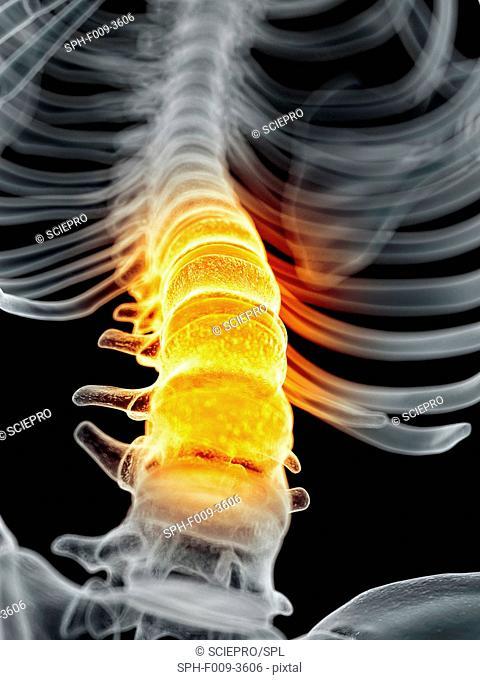Human spine, computer artwork