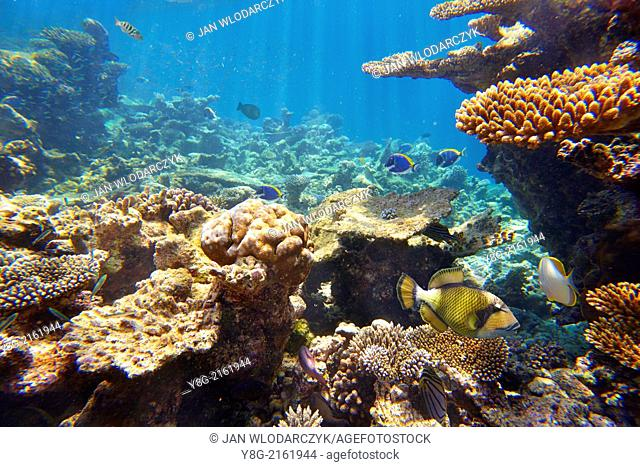 Underwater view with fishes, Maldives, Indian Ocean