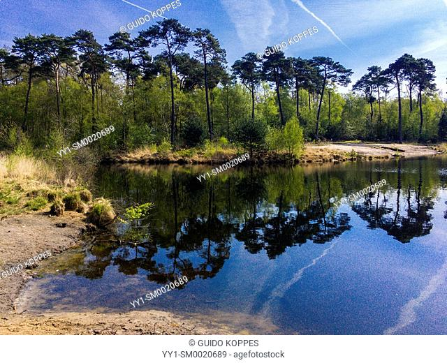 Oisterwijk, Netherlands. idyllic pond and forrest edge with reflections under a blue, sunny sky