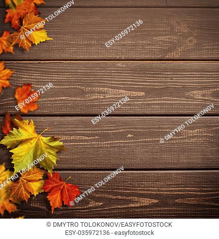 Abstract autumnal backgrounds. Fall maple leaves over vintage wooden desk