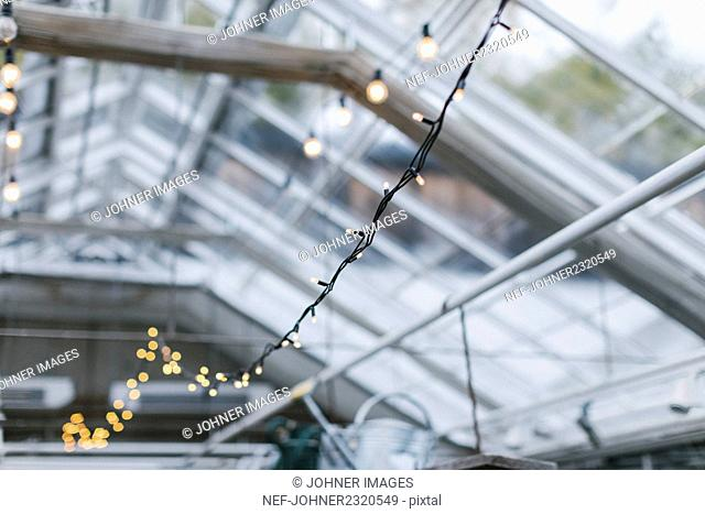 Fairy lights in greenhouse
