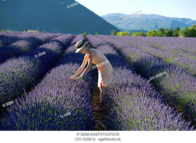 Young woman in blooming lavender field. Provence, France