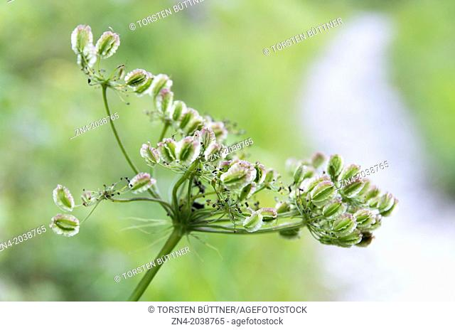 Botany in Kalkalpen National Park. Austria