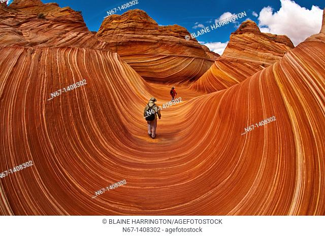 Hikers exploring 'The Wave', a 190 million year old Jurassic-age Navajo sandstone rock formation, Coyote Buttes, Paria Canyon-Vermillion Cliffs Wilderness Area