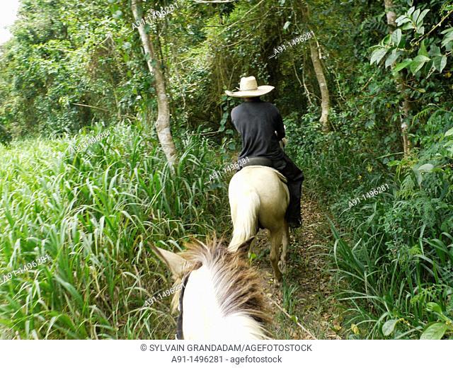 United States of America, Puerto Rico, horse riding in the Hacienda CampRico, 2200 acres