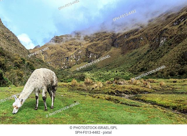 Inca Trail to Machu Picchu (also known as Camino Inca). Located in the Andes mountain range, the trail passes through several types of Andean environments...