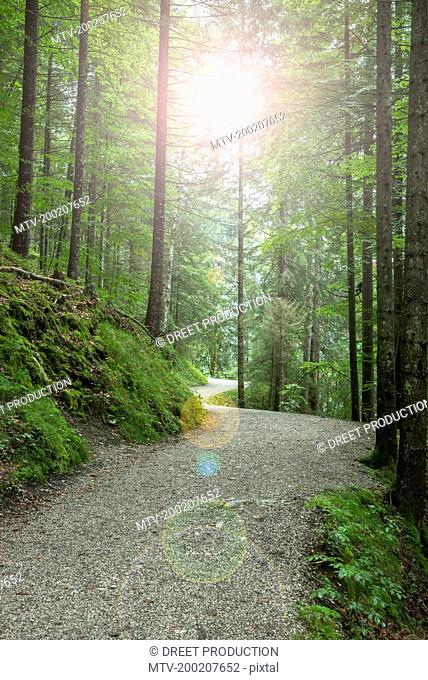 Road passing through spruce forest, Bavaria, Germany