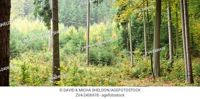 Landscape of a mixed forest in autumn