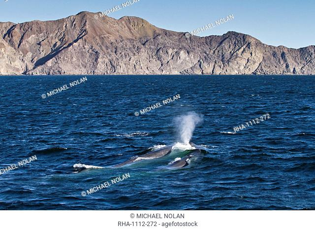 Blue whale cow Balaenoptera musculus and calf, southern Gulf of California Sea of Cortez, Baja California Sur, Mexico, North America
