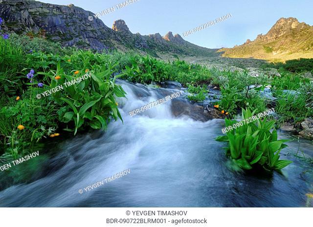 flowers growing around nizhnyaya buiba stream in ergaki national park