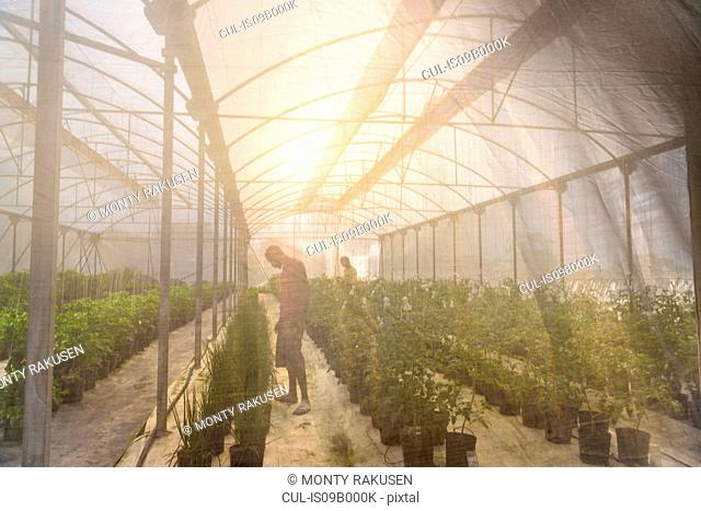 Workers seen through mesh in Hydroponic farm in Nevis, West Indies