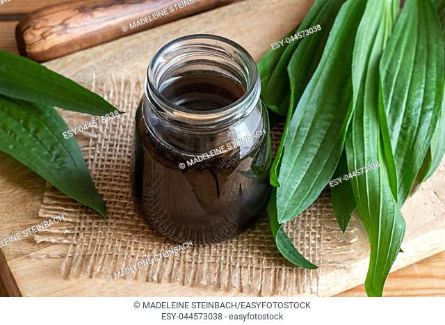 Homemade ribwort plantain syrup against cough with fresh plant