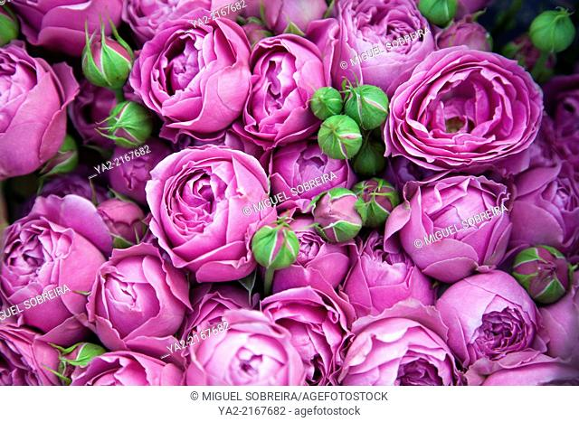Pink Heads of Cut Flowers