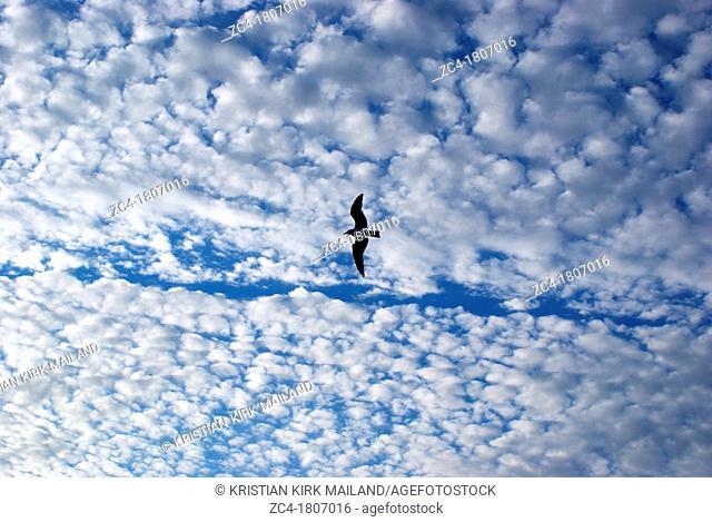 Gull alone against cloudy sky