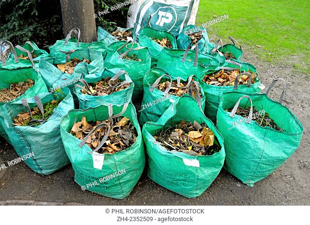 London, England, UK. Sacks of leaves swept up around St Paul's Cathedral