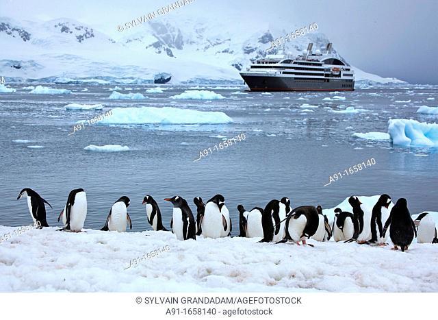 Le Boréal cruise ship, Neko Bay, Antarctica