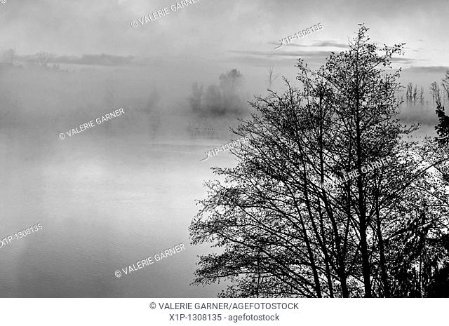 This nature stock image is a foggy morning on a lake at sunrise with the misty rising up off the water Trees in the foreground add further interest to this...