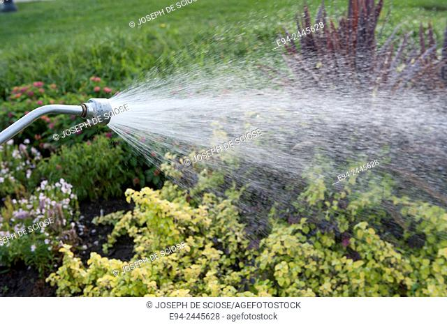 Water spraying from a hose nozzle watering plants in a garden.Botanical Gardens, Pittsburgh Pennsylvania